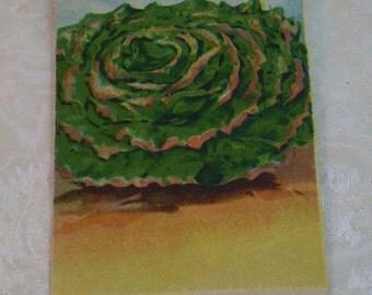 Burt's Seed Company, lettuce seed packet, 1910's unused, Prizehead