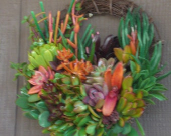 Colorful Spring Time 11 inch Growing Succulent Plants Willow Branches Living Wreath