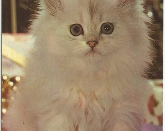 White Kitten Lil Button Eyes Vintage Postcard White Cat White Kittie m1960s