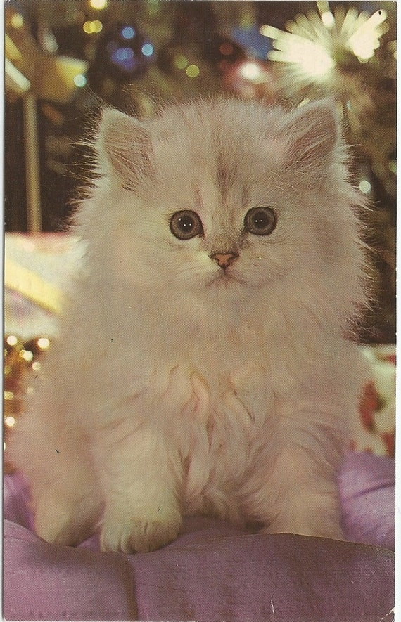 Sweet little White Kitten Lil Button Eyes Vintage Postcard White Cat White Kittie 1960s