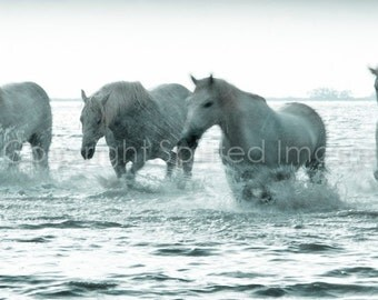 EQUINE PHOTOGRAPHY - Horses of the Camargue - STROLL - Edition Print, Beach, Sea print, Home Decor