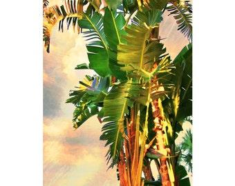 Palm Art, Bird of Paradise, Palm, Fine Art Prints, Tropical Decor, Beach Decor, Palms, Sunset palms