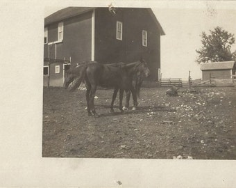 Paddock Pals - Antique 1910s Farm Horses and Piglets Silver Gel Real Photo Postcard