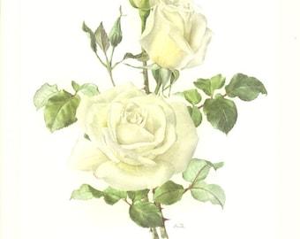 1962 Rose rose Vintage aquarelle botanique American Pillar peinture de rose Déco Roses Deco rose Deco florale Déco florale Cadeau rosier