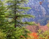Pine Tree in Malibu Creek by Catherine Natalia Roché, Malibu Creek State Park, California Landscape Photography, Forest Nature Photography