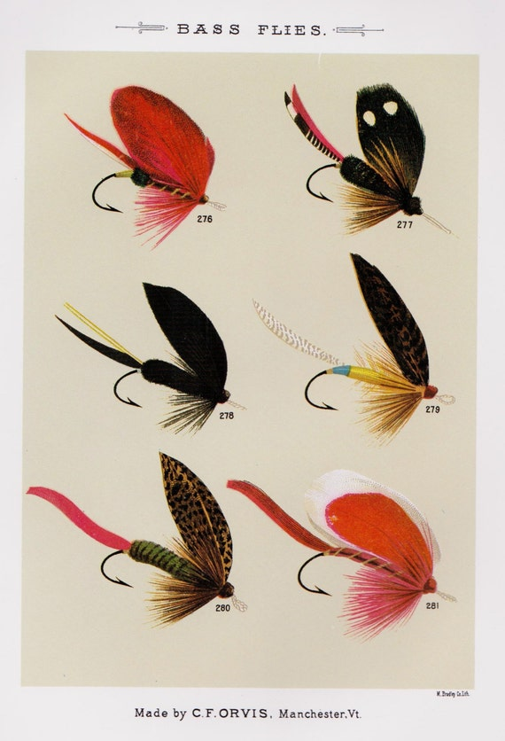 Fishing decor fly fishing print bass flies print by for Fly fishing decor