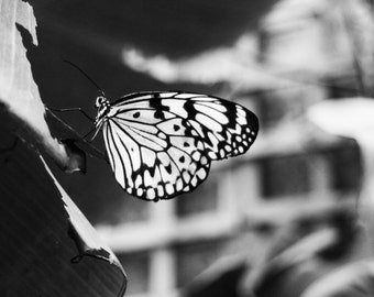 Fine Art Butterfly Photography Digital Download Monochrome Whimsy Nature Flower Black and White Woodland Decor Nature Printable Art Photo