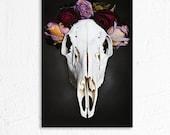 Deer Skull and Dried Flowers Still Life