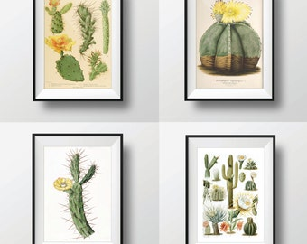 Antique Cactus Print Set of 4 11x14 Botanical Print Set Wall Decor Art Print Illustration Wall Art Cacti Succulent Nature