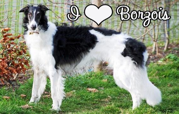 I Love Borzois Dog Fridge Magnet 7cm by 4.5cm