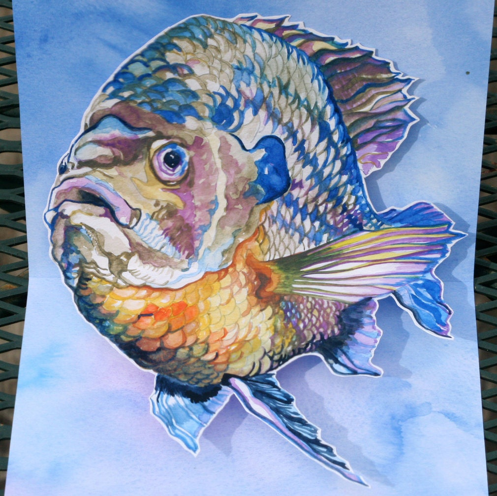 Sun fish perch pop up card for Sun perch fish