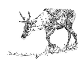 Wildlife drawing, unique animal illustration, caribou artwork, natural history, nursery wall art, reindeer art, black and white art