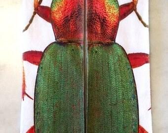 Beetle One Sock