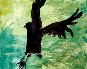 Front Yard Crow, Black Crow, Black Bird