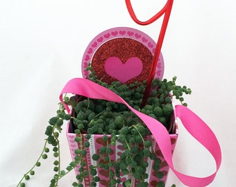 Live String of Pearls Plant in Valentine's Gift Basket plus Ribbon Handles