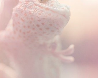 Animal Photography, Nature Photography, Pastel Photo Print, Gecko Art, Pink Wall Decor