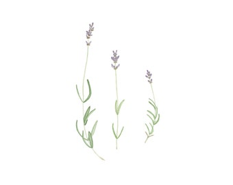 Watercolor Lavender Stems Original Botanical Painting