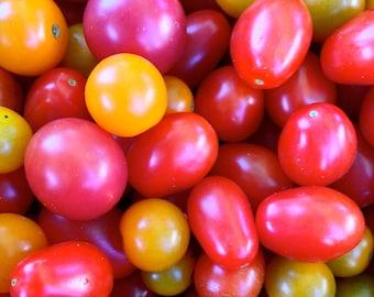So Many Tomatoes! Photo Print