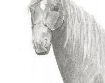 Horse, Charcoal Drawing, Portrait, Black and White, Art, Realism, Classic Art, Print from Original,Gray, Equestrian Art.