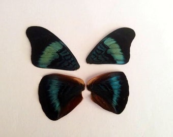 ON SALE Butterfly Wings, Iridescent, Blue, Green, Orange, DIY, Jewlery Making, Crafting, Doll Making, Fairy Wings, Gift Idea