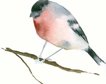 Original Watercolor Painting Bullfinch