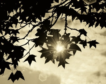 Nature Photography, Trees, Sunshine, Sunflare, Sepia Art, Abstract