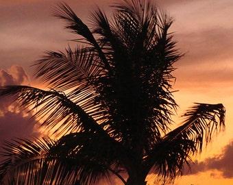 Jamaican Sunset Palm Tree photographic print