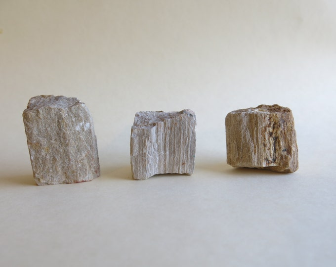 Raw Petrified Wood Chunks