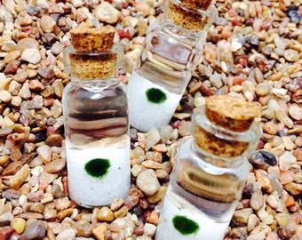 3X Marimo Moss Ball Vials Tiny Aquariums Baby Plants