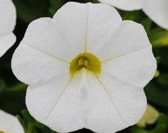 Calibrachoa Seeds Kabloom White 25 Pelleted Seeds