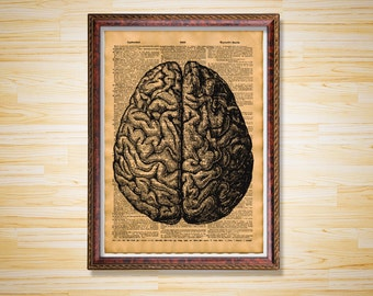 Medical dictionary page Anatomy print Human brain poster
