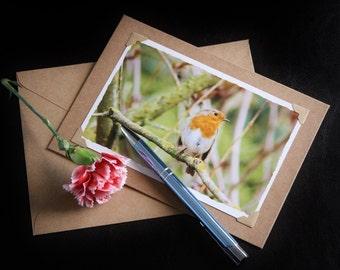 Handmade Card, photo note cards, robin bird print, photo greeting cards, 7 x 5 blank note cards, photo cards, photography cards
