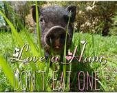 Love a Ham, Don't Eat One - Vegetarian Vegan Pig Nose Photo Fridge Magnet