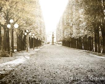 Black and white Paris photography, Paris decore, Symmetrical tree allée, large wall art, paris street lamps photo print, Sepia canvas