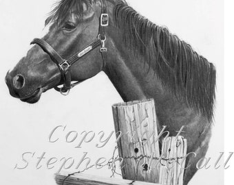 Giclee fine art print of original horse portrait drawing, horse pictures, horse drawings, gifts for men, horse paintings, horse art