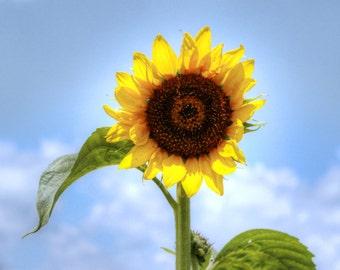 Florida Sunflower