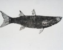 Mullet fish, Gyotaku print - traditional Japanese fish art