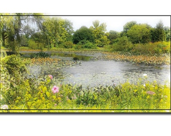 Lovely Summer Pond Greeting Card