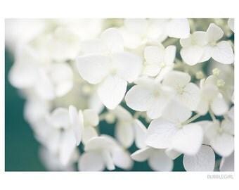 Nature Photography PRINT, White Hydrangea, Wall Art