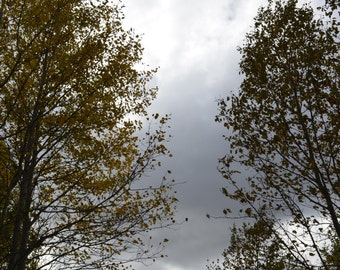 Trees and Cloud