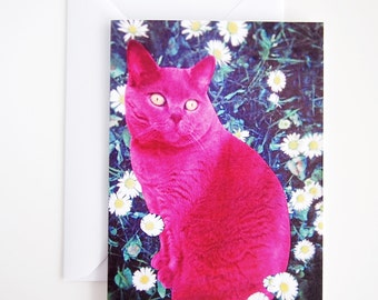 Pink short hair cat birthday card, cat birthday card, pink cat card, british blue cat card, british short hair card, cat lover birthday card