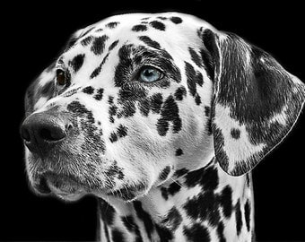 Dalmatian. Custom notecards FREE SHIPPING!!