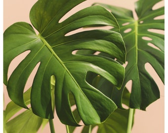 Nature Photograph - Leaf Photography - Botanical Photograph - Verdure #2 - Fine Art Photograph - Alicia Bock - Green Art - Floral Art-Leaves
