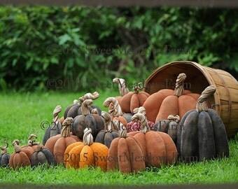 Bountiful Harvest Pumpkins Pattern