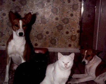 vintage photo Kodak Color Snapshot Black and White CAt Two Terrier Dogs CAts and Dogs oh My