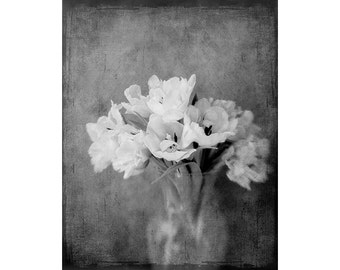 Black and White Photography, White Tulip Art, Still Life Photography,  8 x 10 Tulip Photo Wall Decor, 11 x 14 Print,