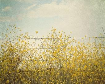 Nature Photography, Mustard Field, Yellow Wall Art Print, Wildflower Photo, Country Home Decor, Blue Summer Art, Mustard Flowers