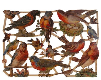 Germany Paper Scraps Colorful Birds Die Cuts Beautifully Embossed  7281