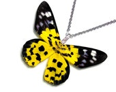 Real Butterfly Wing Necklace (WHOLE Dysphania Militaris - W073)