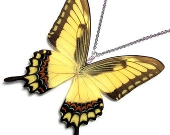 Real  Butterfly Wing Necklace / Pendant (whole Papilio Lycophron Butterfly - W037)